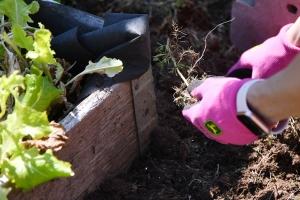 Hands working in the garden